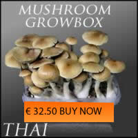Magic Mushrooms Thai
